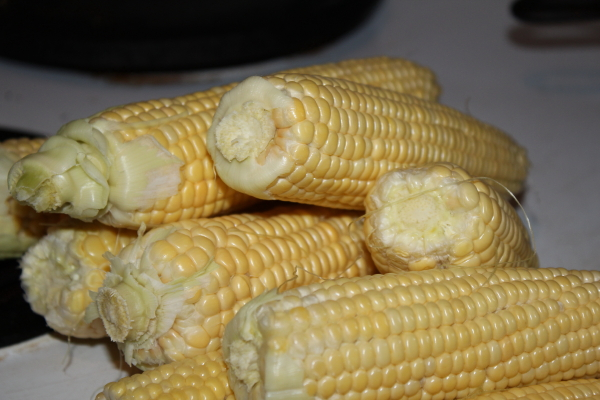 Golden sweet corn right from garden to steamer.